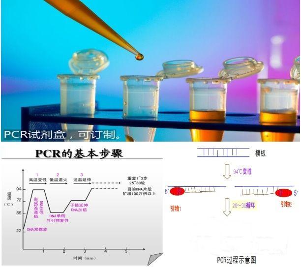 鲍疱疹样病毒PCR检测试剂盒图片