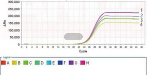鲍氏不动杆菌PCR检测试剂盒图片